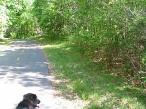 Elm Creek dog path