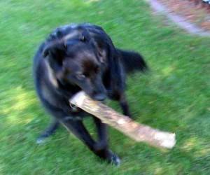 Java with log