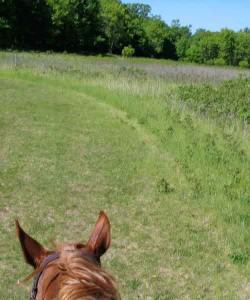 Riding through meadow