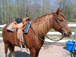 Luke saddled and ready