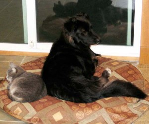 Shy and Java