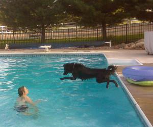 dog and pool