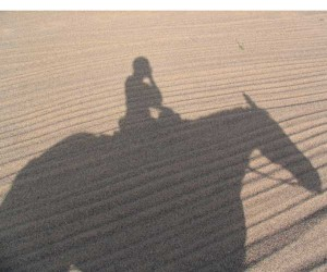 Horse and rider shadow
