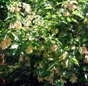 tree at seed