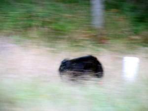 dog a blur