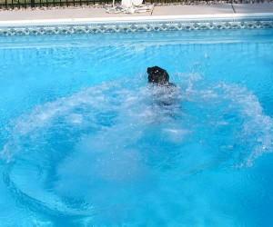 dog in pool