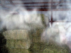 haunted hay