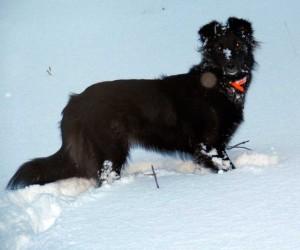 dog in snow