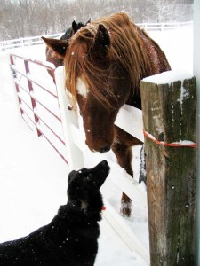 dog with horses