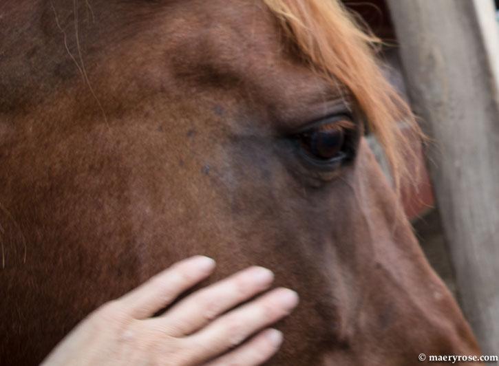 petting my horse