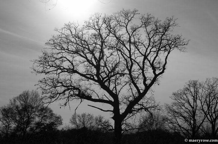 tree profile