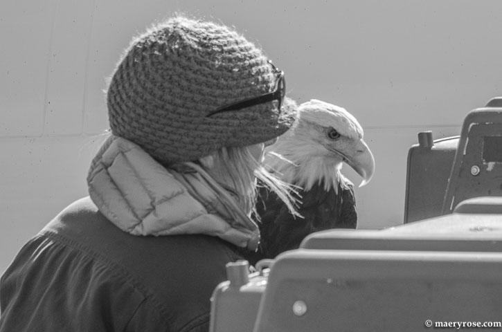 Eagle  from U of M Raptor Center