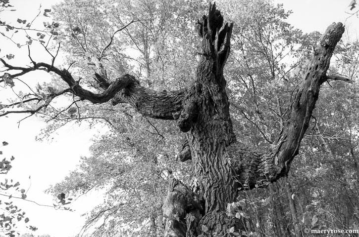 Tree in Sherburne Wildlife Refuge