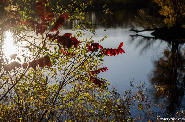 sumac on the river
