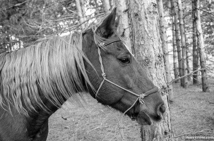 horse in woods