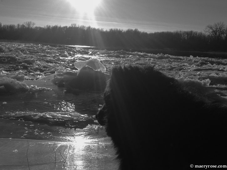 dog by river