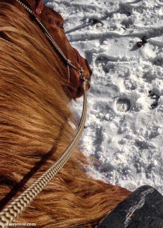 horseback riding in snow