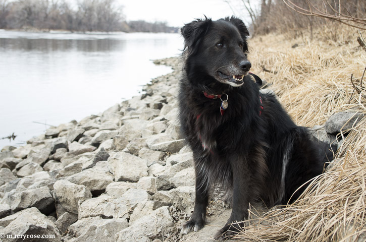 dog by Mississippi River