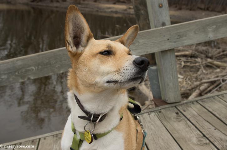 dog on fishing dock