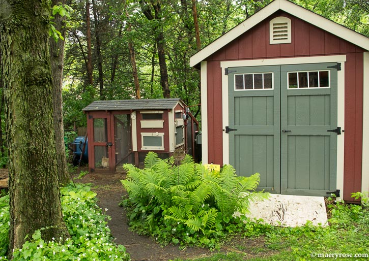 chicken coop and shed