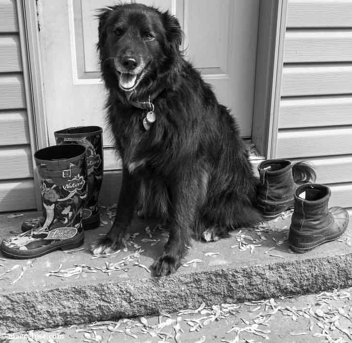 dog sitting on step