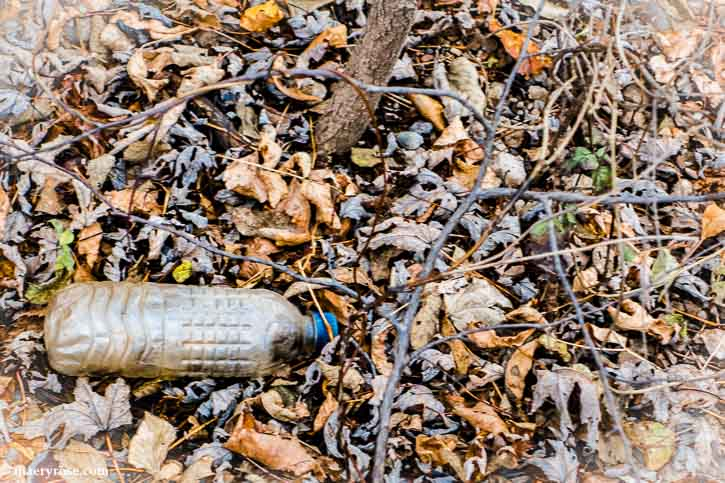 Litter in the woods