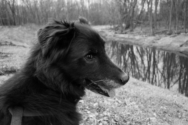 dog by branch of Mississippi River