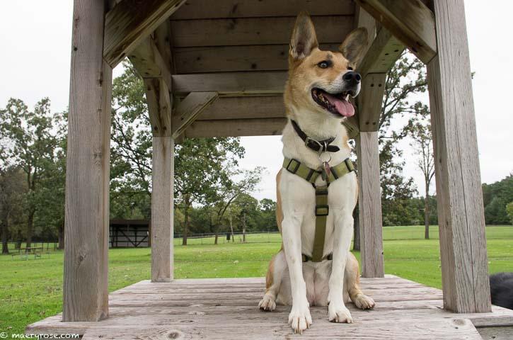 dog photo posing