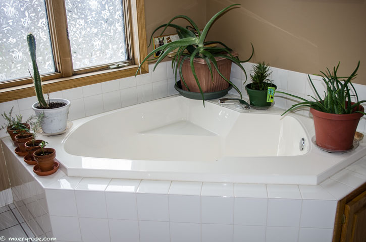 plants around bathtub
