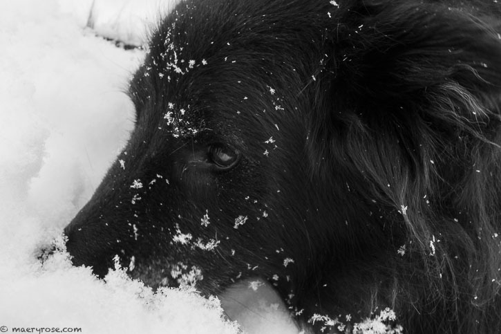 dog being fully present in the snow