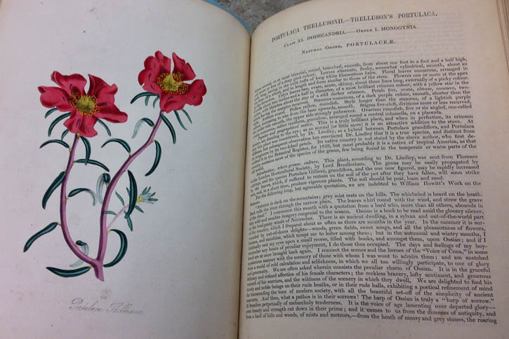 Plant book at Owen H. Wangensteen Historical Library of Biology and Medicine
