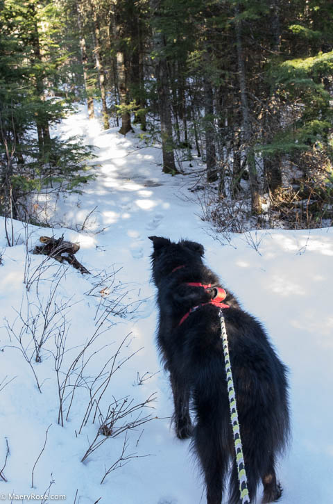Dog walk Gunflint Trail