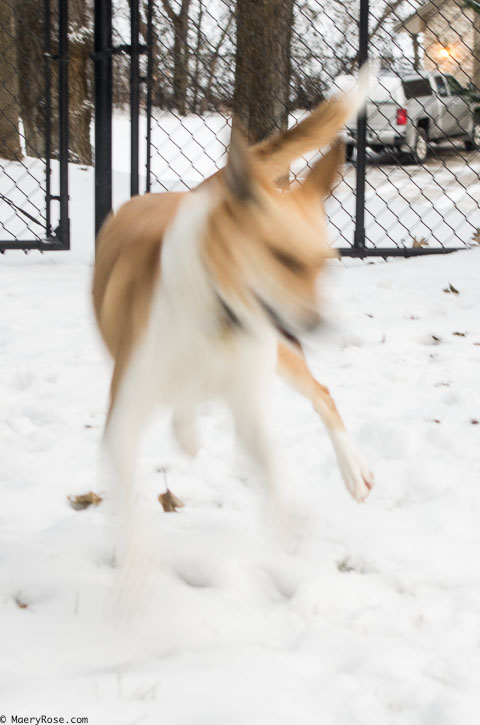 dog running in a blur