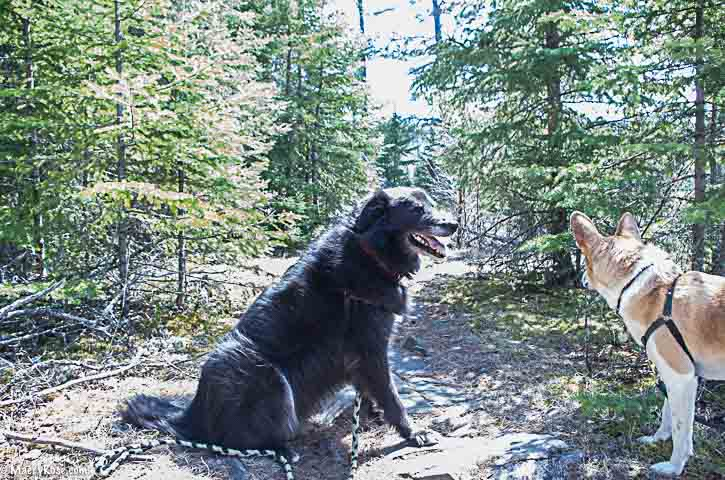 Two dogs on trail