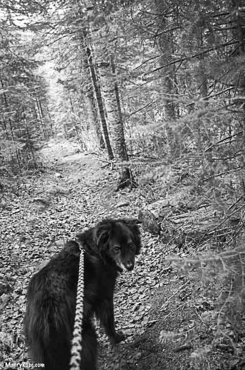 Dog walking Boundary Waters