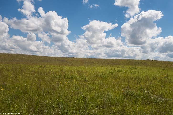spacious meadow