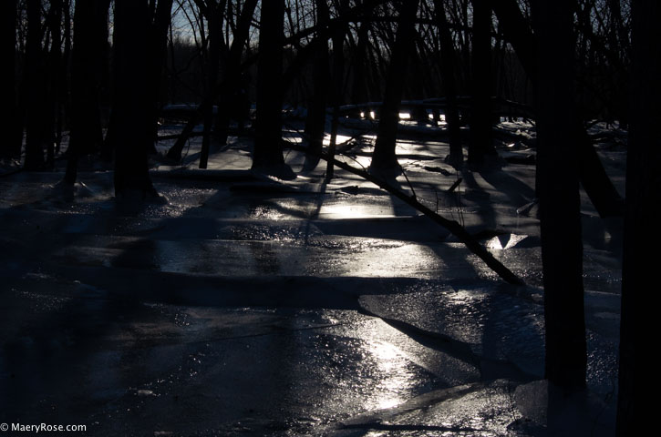Mississippi River overflowing and creating ice in the woods