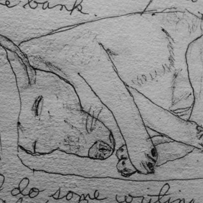drawing of dog sleeping on couch