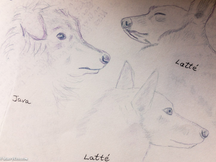 dog sketches