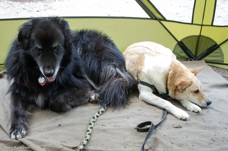 dogs in screen tent