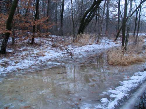 Snowshoeing Blues
