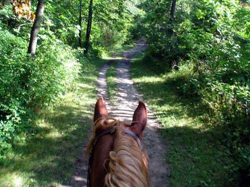Definite Lift-my-spirits and Feel-good Ride