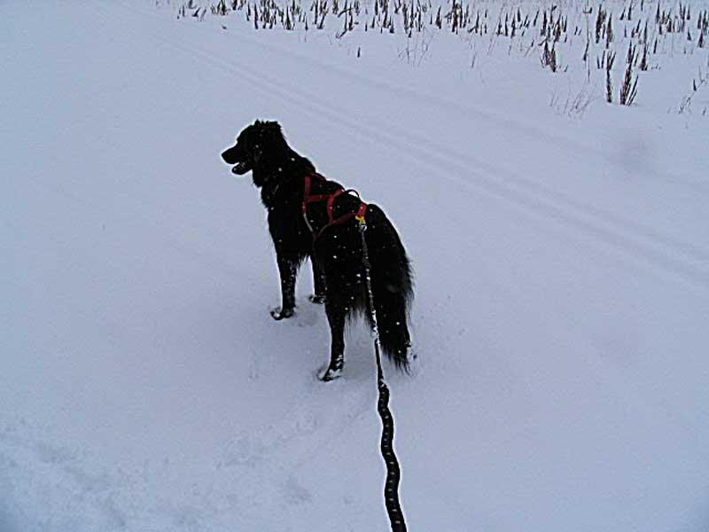 Taking Advantage of Fresh Snow