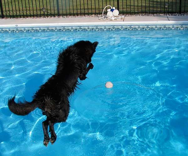 Java's Pool