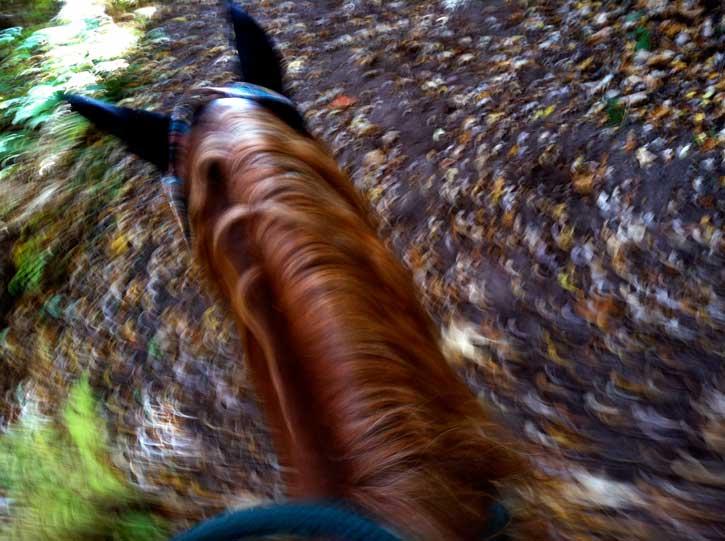 Blazing Trails in Fall Glory!