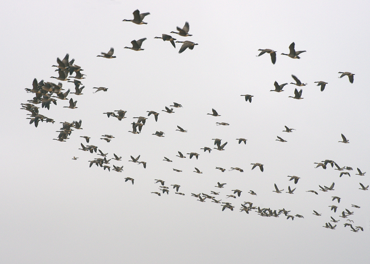 A Flock of Thoughts