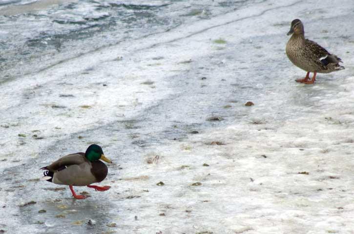 Getting All My Ducks in a Row