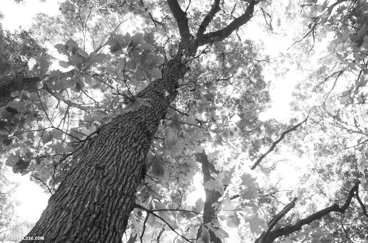 Making Adjustments: Lessons Learned From an Ash Tree