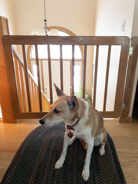 stairway dog gate